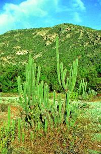 http://www.cykloturista.cz/cykloturistika/clanky/2002/6/kaktusy.jpg